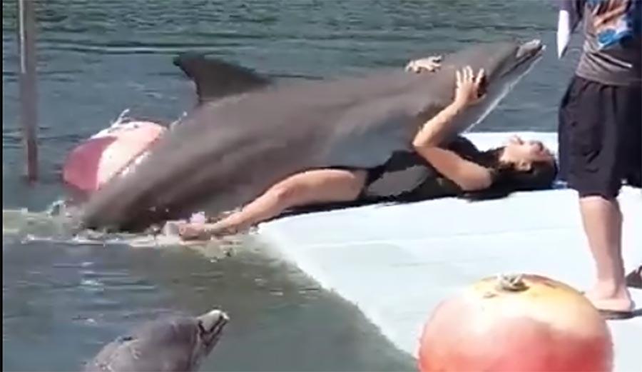 על יבש: מרוב אהבה גם דולפין יכול לדפוק בני אדם