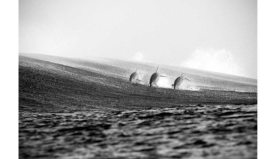 """Dolphins breach the surface. Photo: <a href=\""""http://clareplueckhahn.com.au/\"""" target=_blank>Clare Plueckhahn</a>"""