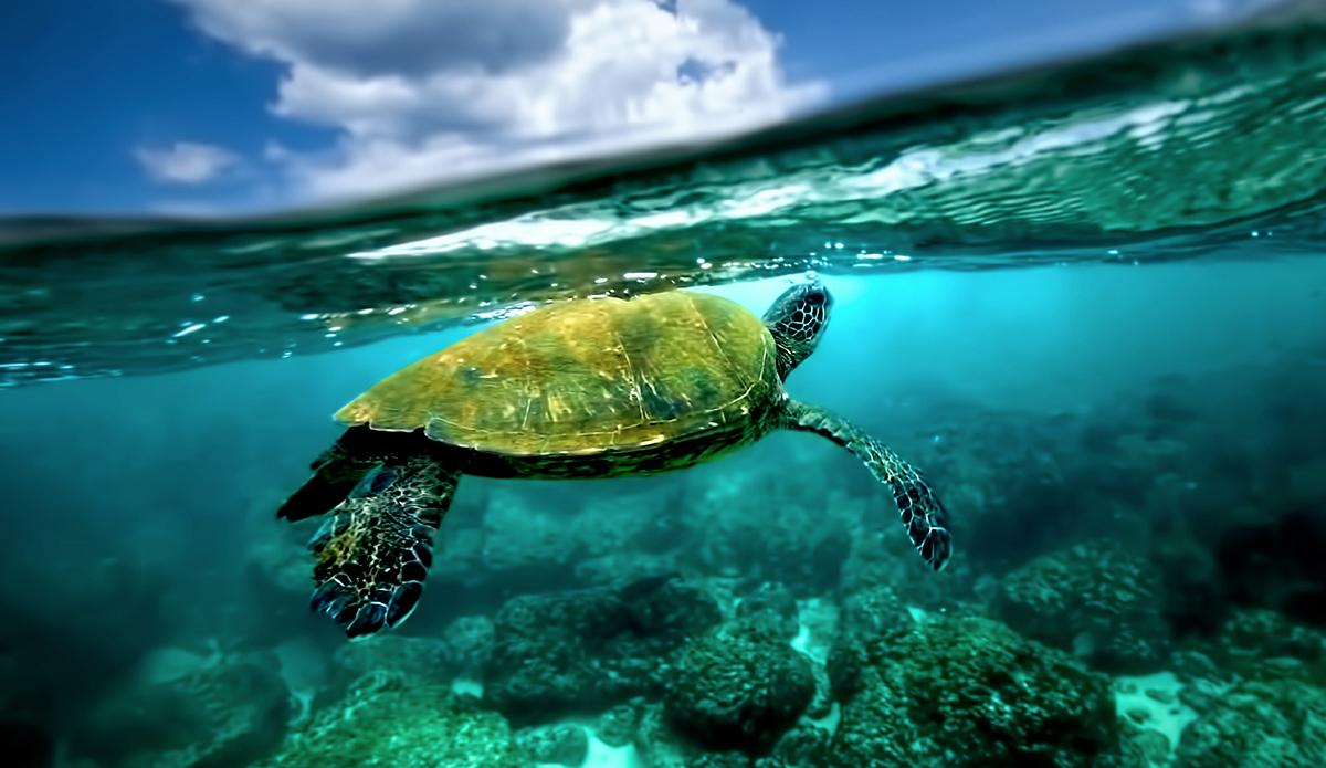 "Swimming with these amazing animals is always a rush. Photo: <a href=\""http://craiglarsonimaging.com/\"">Craig Larson</a>"