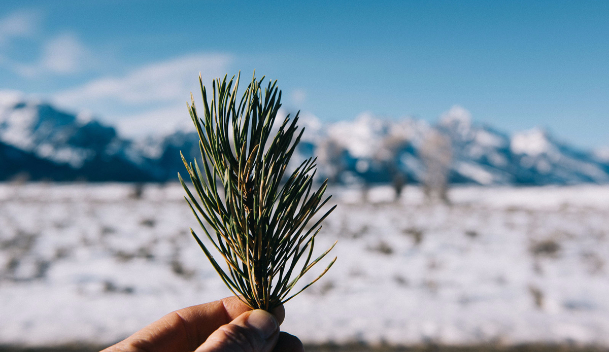 "Pine needles, Wyoming. Photo: <a href=""http://instagram.com/deanblottogray\"">Dean Blotto Gray</a>"