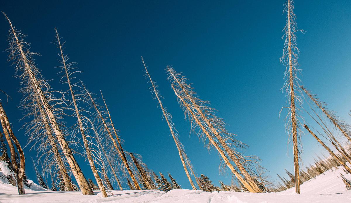 """Trees, Montana. Photo: <a href=\""""http://instagram.com/deanblottogray\"""">Dean Blotto Gray</a>"""