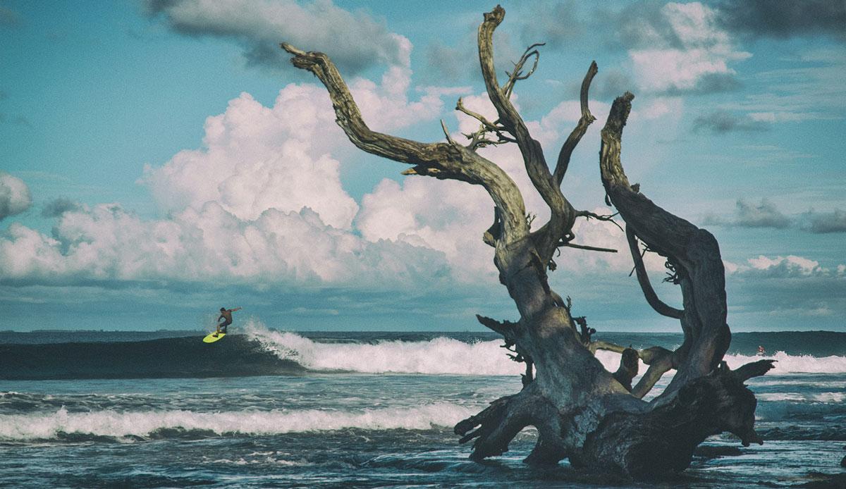 "Mentawai land. Photo: <a href= \""http://joaobracourt.com/\"" target=_blank>Joao Bracourt.</a>"