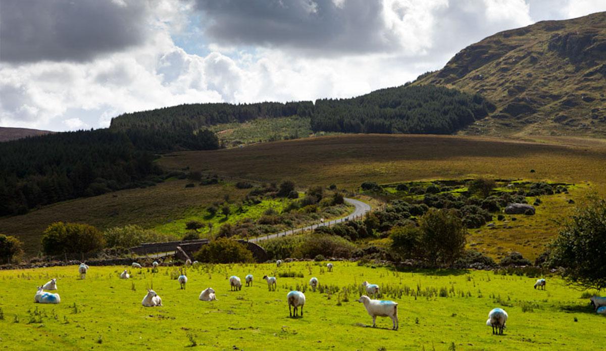 The grass is always greener. In Ireland. Photo: Cody Welsh