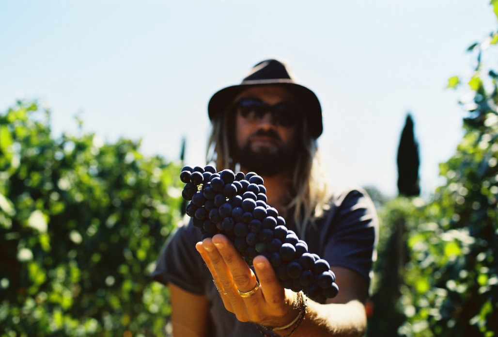 Chris Del Moro tastes a bit of Italian grapes. It's hard work. Photo: Bella Vita