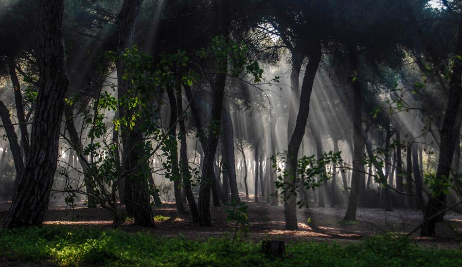 "A foggy path with magic light. Photo: <a href=\""http://www.jorgeibáñez.com\""> Jorge Ibáñez</a>"