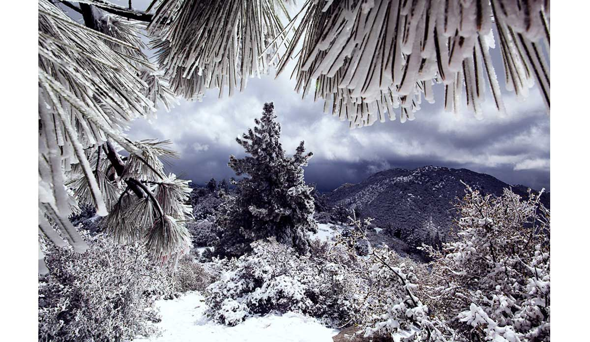 "Winter storms blanket the forest in Idyllwild, California. It was my first time visiting California and seeing the diversity mesmerizes me. From mountains to sea. Snow to sand – I love it! Photo: <a href=""http://www.luciagriggi.com\"" target=\""_blank\"">Lucia Griggi</a>"