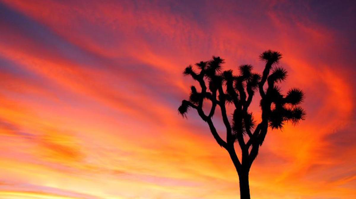 Joshua Tree sunset. Photo: Brad Sutton