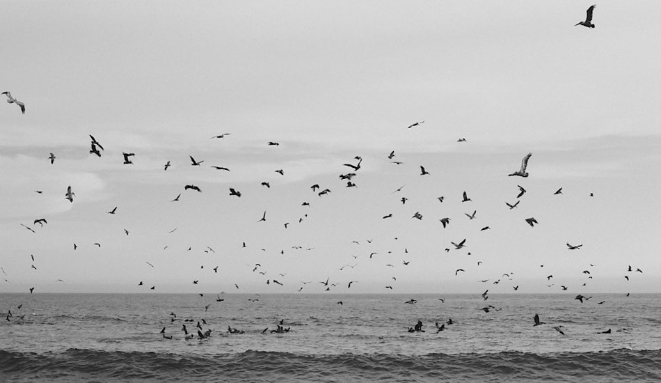"""I was drinking some beers on the beach in Mex when a bait ball moved in close and the birds went apeshit. Canon eos 3, fuji acros 100 film. Photo: <a href=\""""http://fotoburns.com\"""">Adam Burns</a>"""