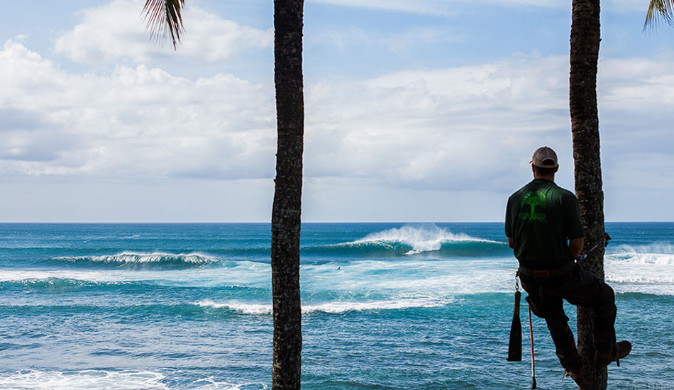 """If you live on the North Shore of O'ahu and need some trees trimmed, removed, planted or cared for, call my good buddy Ash at Green Hawaii Tree Care. Or you can find him pulling in near the rocks at Pinballs. Photo: <a href=\""""http://markmcinnis.com/\"""">Mark McInnis</a>"""
