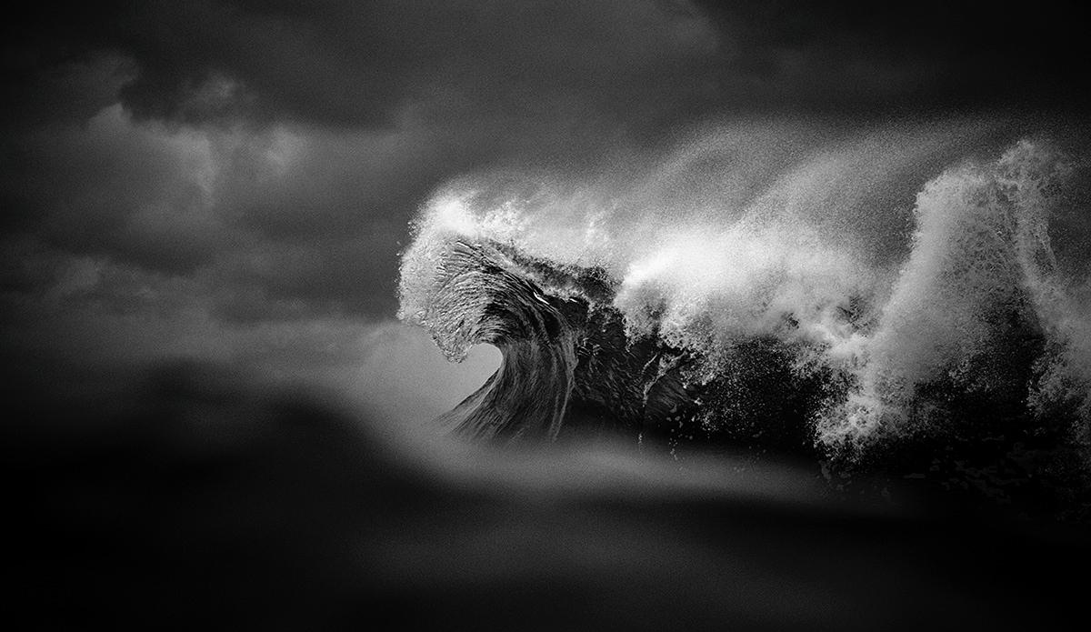"Fury. Photo: <a href=\""https://www.raycollinsphoto.com\"">RayCollinsPhoto.com</a>"