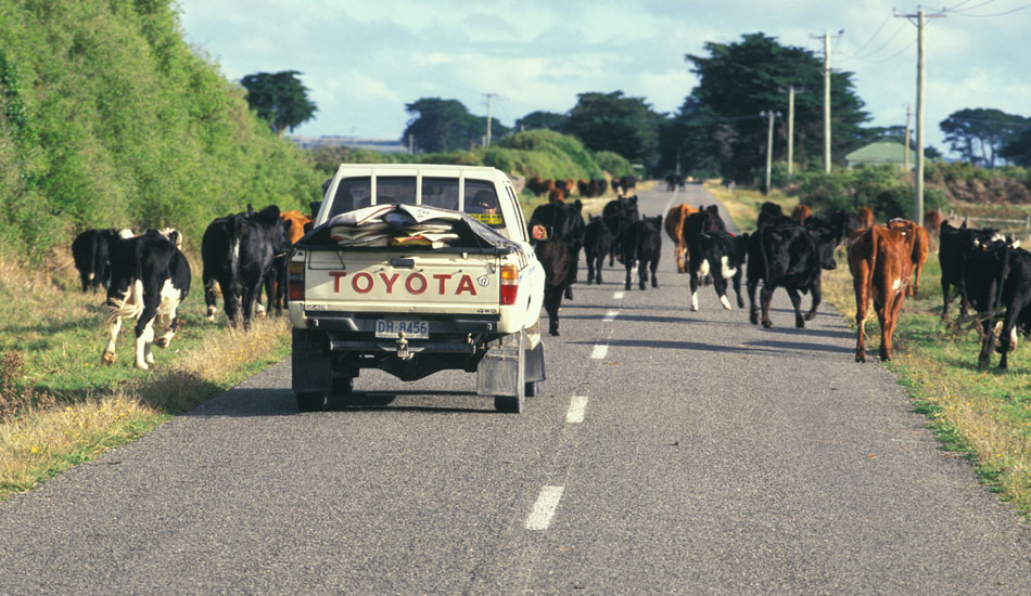 """Rural driving just about always entails a couple of unscheduled traffic stops. Photo: <a href=\""""http://seandavey.com/wordpress/\"""" target=_blank>Sean Davey</a>"""