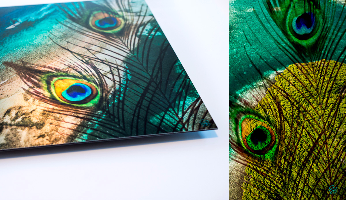 """Surfer Peacock. Photo: <a href=\""""http://www.artography27.com/\"""">Stacey Bodnaruk</a>"""
