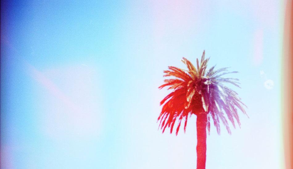 "Palm trees never get old. Photo: <a href=\""http://www.ryantatar.com\"" target=\""_blank\"">Ryan Tatar.</a>"