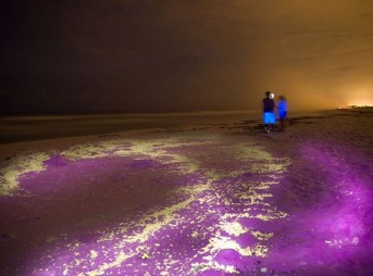 Ultraviolet light reveals oil still on the surface of the Gulf of Mexico. Photo: Chris Combs/National Geographic