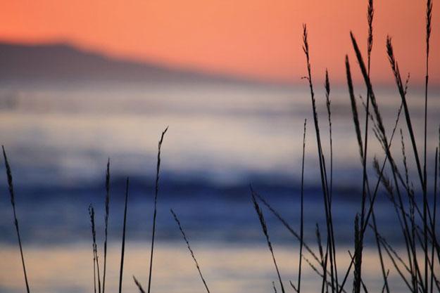 Thanksgiving ocean wheat