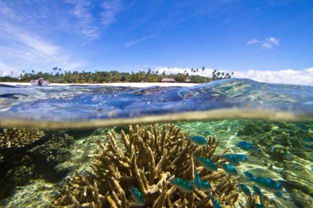 Reef in Fiji