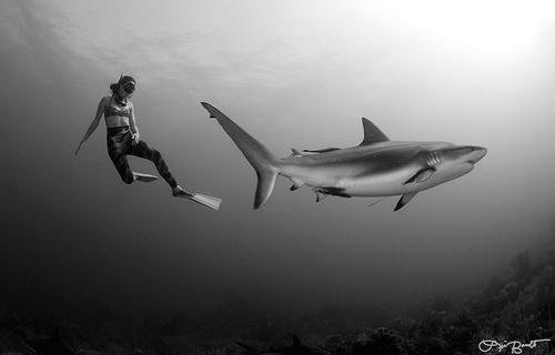 freediving, shark, lia barrett photography, underwater photography, swimming with sharks