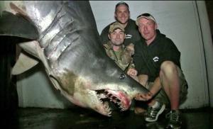 World Record Mako Shark Huntington Beach