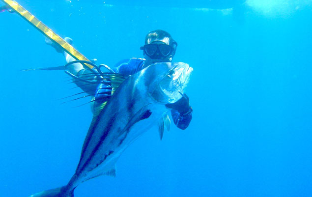Roosterfish in Panama. Beautiful.