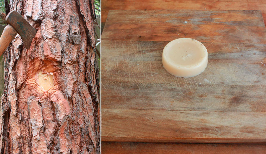 From tree to wax. Easy! Sort of.