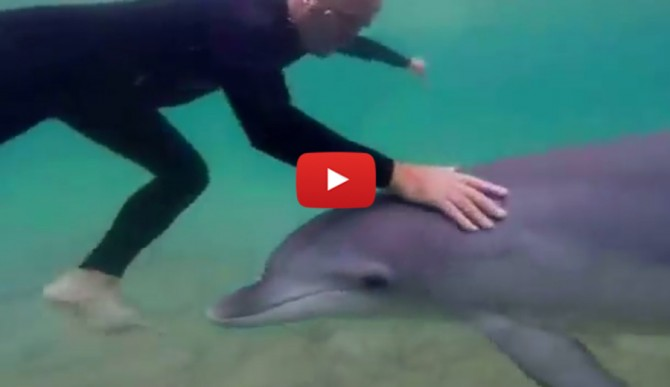 dolphin-dog-body