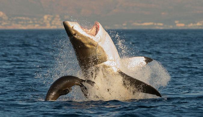 Fear not! Photo: Shutterstock