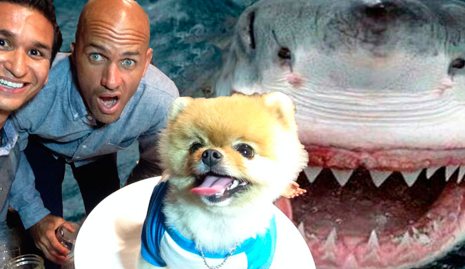 Then we did a quick shark dive. JiffPom scared the shit out of Jaws.
