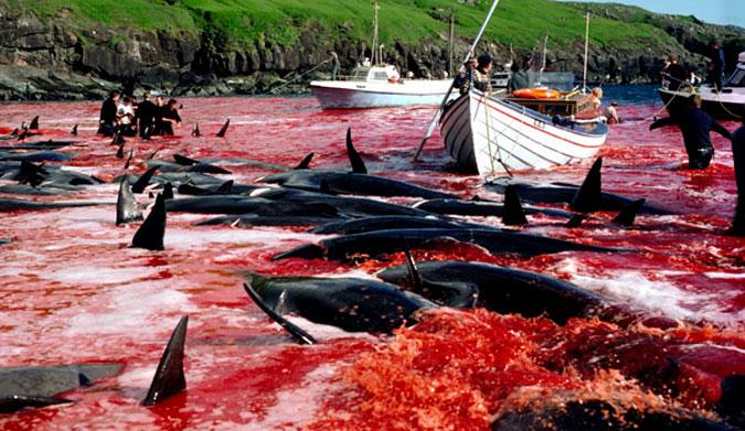 North Faroe Islands