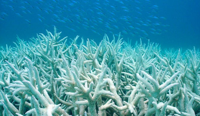 Great, now the Great Barrier Reef has herpes. Kinda. Photo: Duke University