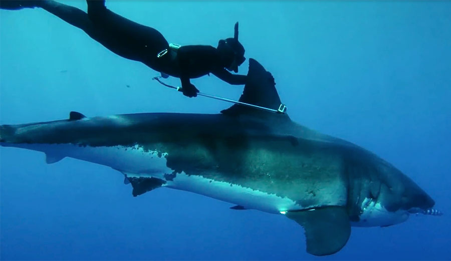 Kimi Werner Woman Rides Great White Shark