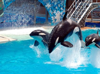 SeaWorld's orca attraction will come to an end next year... but it's just being repackaged.