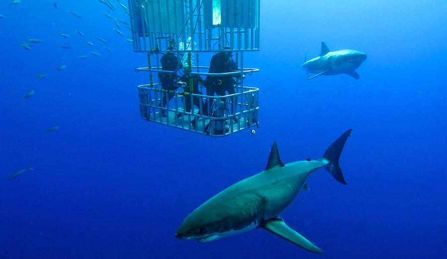 Sharks just wanna dance, apparently. Photo: Shutterstock