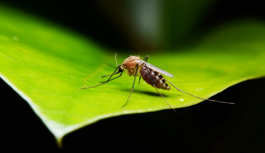 Zika Virus: What You Need to Know - The Amino Company
