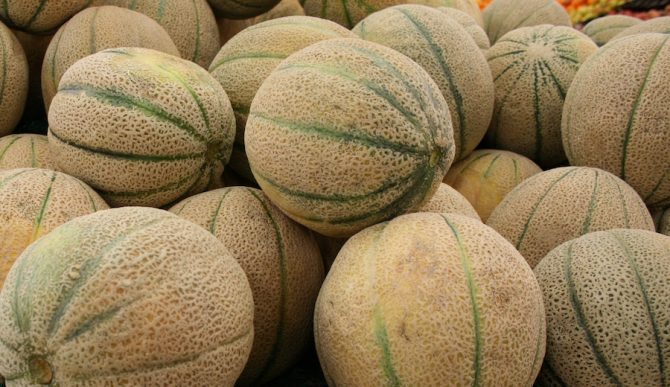 Oh man. Check out those melons! Photo: Wikipedia