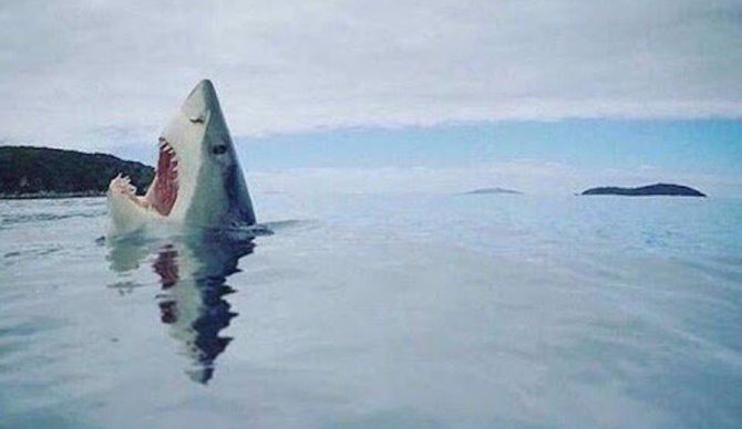 """""""Aaargghhhh!!"""" Photo: Mike Coots"""