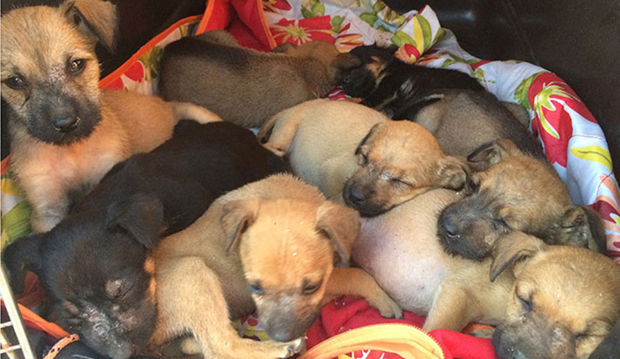 The puppies, just a day after we found them in a box. Photo: Lindquist