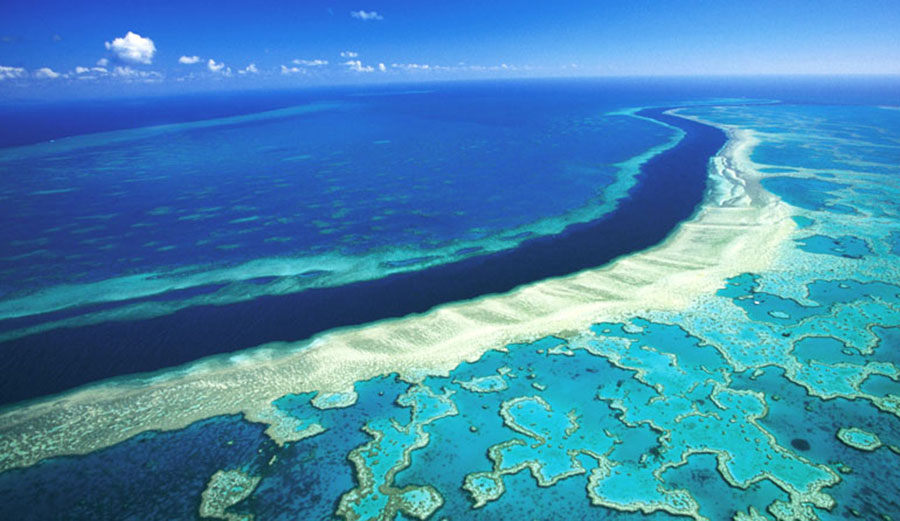 Scientists believe that low-lying clouds could reflect the sun's heat back out to space, allowing the waters around the dying reef to cool down.