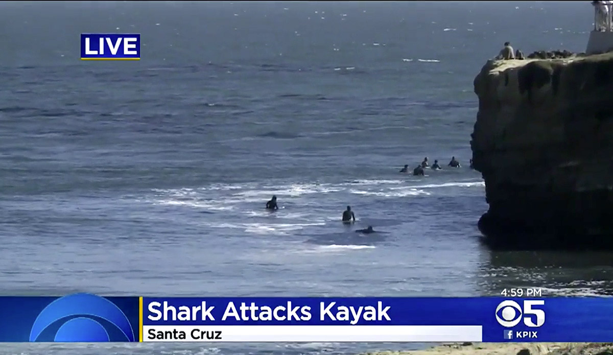 Shark Attacks Kayak Outside of Steamer Lane, Prompts 4-Day