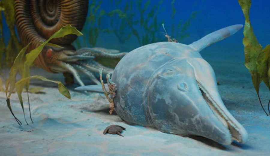Holmzaden ichthyosaurs died off at the beginning of the Cretaceous-Paleogene extinction pulse. Image: Utah Museum