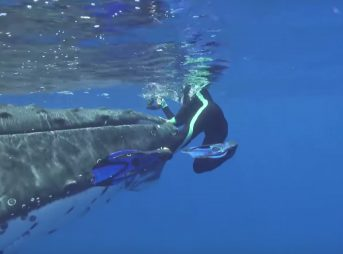 A Whale Protects a Marine Biologist from a shark