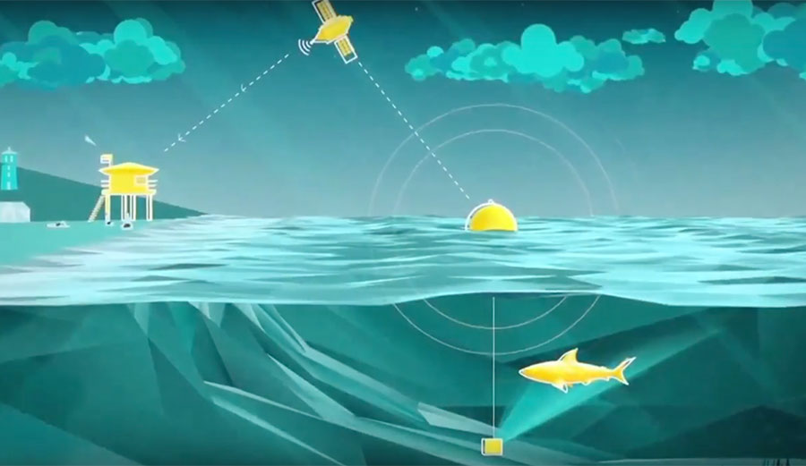 Ingenious Shark Detection System Proposed For California