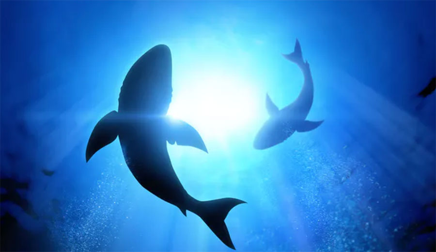 Today's sharks are known to use electroreception to find their prey.