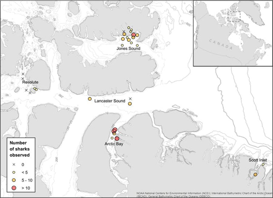 Map of baited camera deployments where Greenland sharks were observed, with symbol sizes proportional to the number of individuals distinguished from each set. The 'X' indicates sets where no sharks were observed.