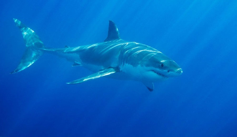 A shark attack in nearby Gracetown has caused WSL officials to put the Margaret River event on hold. Image: iStock
