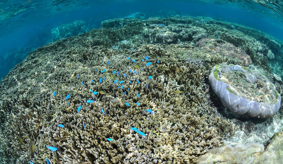 A sick Japanese reef. 99 percent of Japan's largest reef is dying. Image: Shutterstock