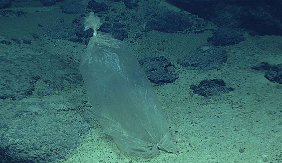 Plastic ice bag found by a NOAA expedition to the Marianas in 2016. Image: NOAA Office of Ocean Exploration and Research