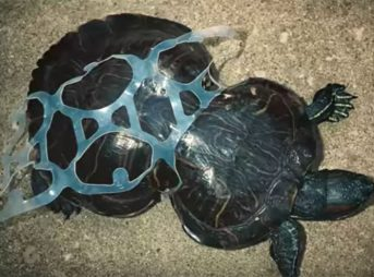 Corsets are not a good look for a turtle. Image: Saltwater Brewery