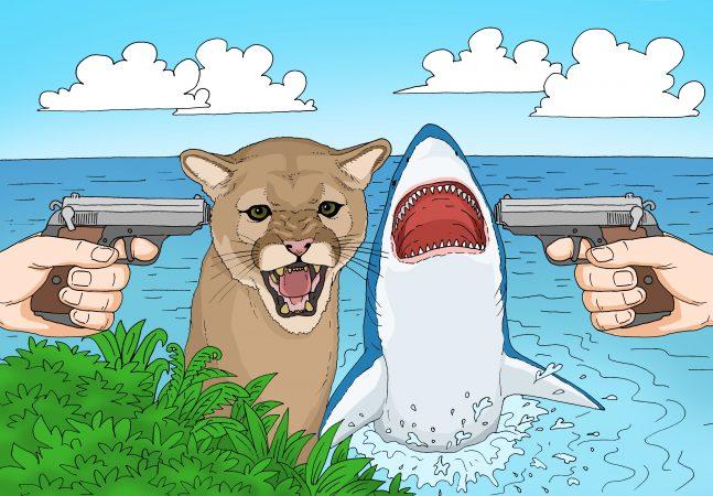 If a cougar and a shark kill a human, what happens next? Art: GaryL