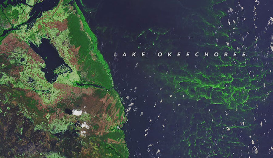 Algae is clearly visible in this satellite image of southwestern Lake Okeechobee, taken July 15, 2018. NASA Earth Observatory