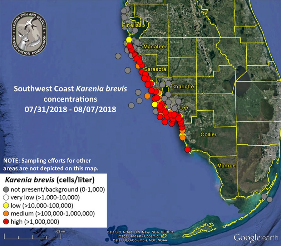 Florida's red tide outbreak as of Aug. 8, 2018. Image: Florida FWC